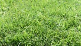 Gräsbakgrund, växande gräs på jord Arkivbild