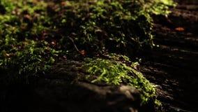 Gräsbakgrund växte /Green bakgrund lager videofilmer