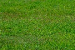 Gräsbakgrunden parkerar in av Thailand Arkivfoton