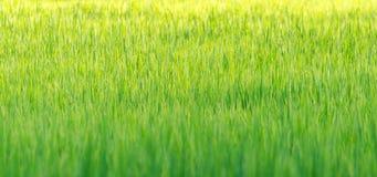 Gräsbakgrundstapet Arkivbilder