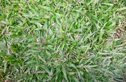 Gräsbakgrundstextur Arkivbilder