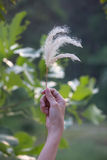 Gräsblomma i damhand med suddighetsbakgrund royaltyfria foton
