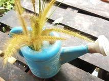 gräsblomma i plast- krus royaltyfri bild
