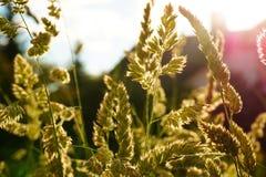 Gräsblomma i trädgård Arkivfoto