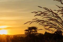 Gräsblomma med bakgrund i solnedgång Arkivbild