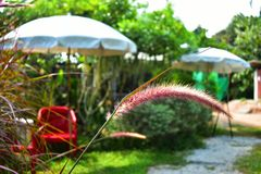 Gräsblomma med bur den röda stolen med whitwparaplybakgrund royaltyfri fotografi
