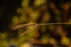 Gräsblomma och solljus Royaltyfri Bild