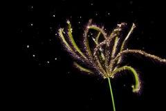 Gräsblomma som slår i winden Royaltyfri Foto