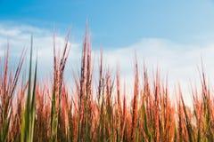Gräsblommabakgrund Fotografering för Bildbyråer