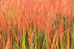 Gräsblommabakgrund Royaltyfri Fotografi