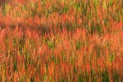 Gräsblommabakgrund Royaltyfri Bild