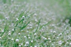 Gräsblommabakgrund Arkivfoton