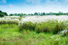 Gräsblommafält royaltyfri fotografi
