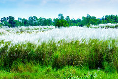 Gräsblommafält arkivbilder