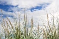Gräsblommafält med blå himmel Arkivfoto