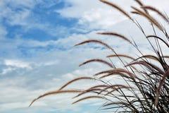 Gräsblommafält med blå himmel Royaltyfria Bilder
