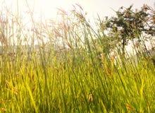 Gräsblomman reflekterar Royaltyfri Bild