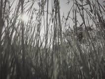 Gräsblomman reflekterar Royaltyfria Foton