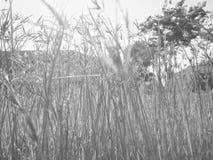 Gräsblomman reflekterar Arkivfoto