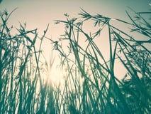 Gräsblomman reflekterar Arkivbilder