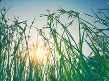 Gräsblomman reflekterar Fotografering för Bildbyråer