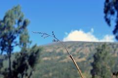 Gräsblommaslut upp på berget av Rinjani Royaltyfria Bilder