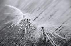 Gräsblommor Arkivbilder