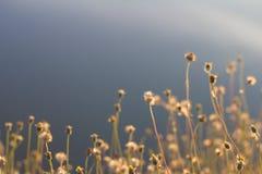 Gräsblommor arkivbild