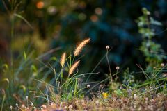 Gräsblommor blommar i trädgården med suddig effekt för lins som förgrund och bakgrund arkivfoto