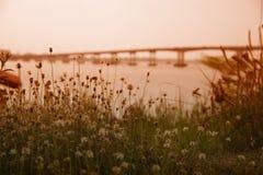 Gräsblommor i bakgrundssuddighetsbron Arkivfoton