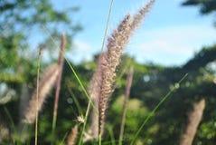Gräsblommor och himmelbakgrund Royaltyfri Fotografi