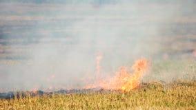 Gräsbränning i en lös bushfire utomhus lager videofilmer