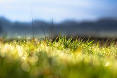 Gräsdetalj med morgondaggsmå droppar arkivfoto