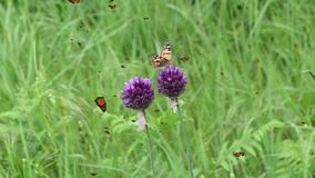 Gräsdjurväxter i naturen och fjärilar som flyger i luften