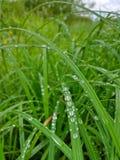 Gräsdroppar regnar fuktigt arkivfoton