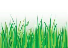 Gräser stockbild