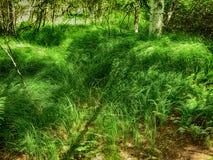 gräser Lizenzfreie Stockfotografie