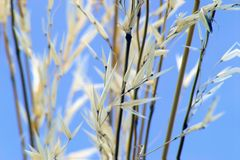 gräser Lizenzfreies Stockfoto