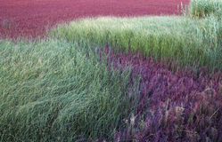 Gräser, die auf einem Stück Sumpfgebiet wachsen Stockfoto