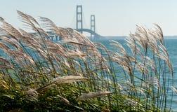 Gräser, die im Wind an der Mackinac-Brücke in Michigan durchbrennen stockbild