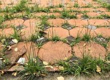 Gräser, die zwischen Fußbodenbelagblocksteinen wachsen Stockbild