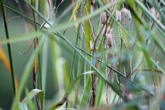 Gräser im englischen Garten, Nahaufnahme, mit Lavendel und kleinen flowes 8 lizenzfreies stockbild