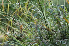 Gräser im englischen Garten, Nahaufnahme, mit Lavendel und kleinen flowes 11 lizenzfreie stockbilder