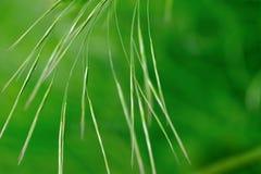 Gräser im Grün Lizenzfreies Stockbild