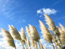 Gräser im Wind Stockbild