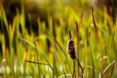 Gräser und Schilfe Stockbild