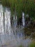 Gräser und Wasserreflexion Lizenzfreies Stockfoto