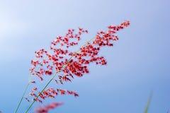 Gräset är det andra ljuset Inverkan är ljus, royaltyfri bild