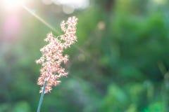 Gräset är det andra ljuset Inverkan är ljus, arkivbild