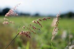 Gräset är det andra ljuset Inverkan är ljus, royaltyfri fotografi